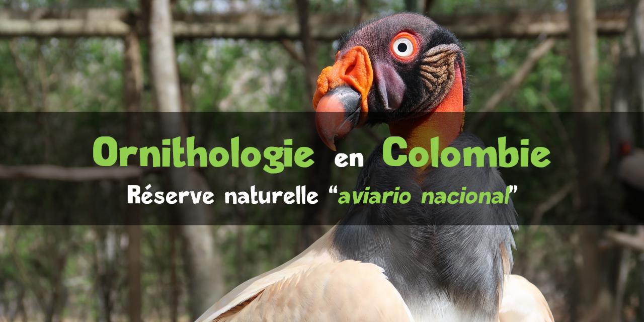 Observer des oiseaux en Colombie